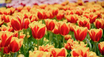 rôles de fleurs