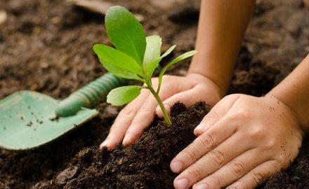 Les arbres nous sauvent